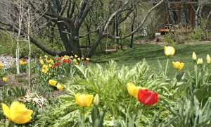 Spring in Steamboat Springs, Colorado