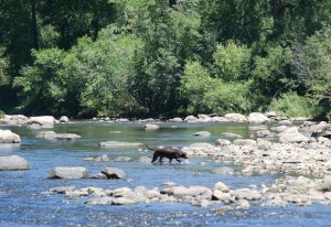 Low Flows on the Yampa River