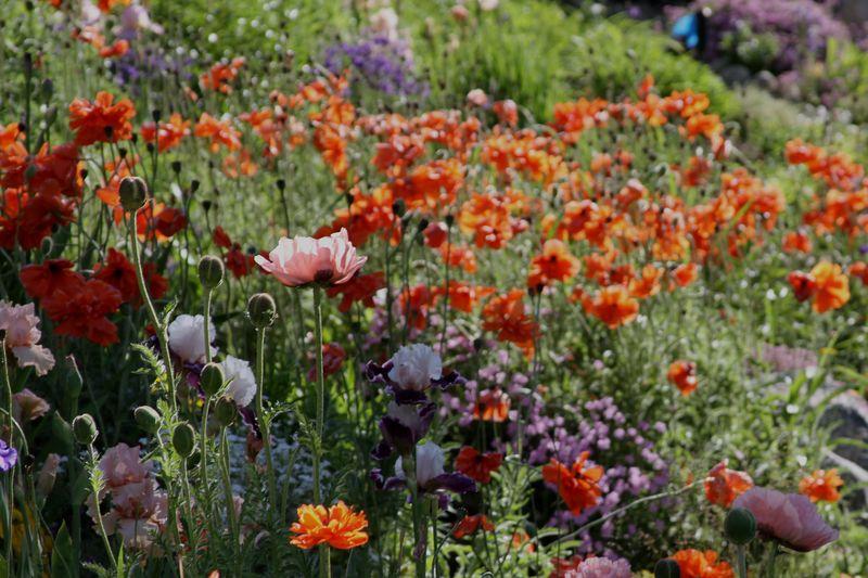 Glorious Alpine Flowers